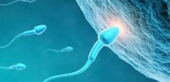 乌兰浩特好妇科医院,卵子能活多久?